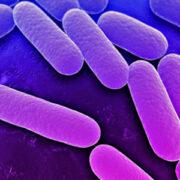 mikrobiologiko